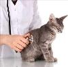 Ветеринарные клиники в Новоселово
